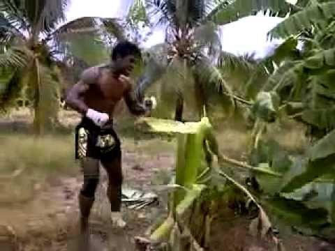 Muay Thai Training - Buakaw, smashing a banana Tree...