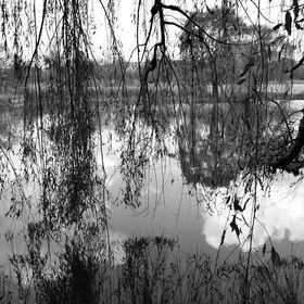 BlackandWhiteNature by anneriejacobs