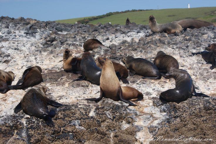 Tasmania, Day 7. Stanley Seals Cruise