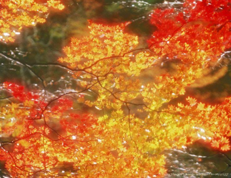 herfst tint en toon