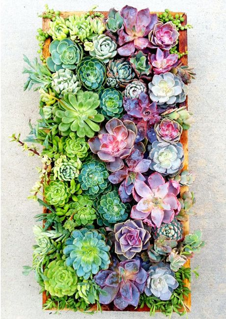 I love everything about succulents...I don't garden (yet!), but if I did, I'd have this vertical garden!