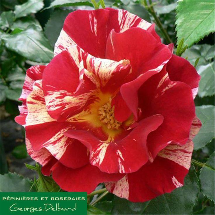 101 best Gardening images on Pinterest