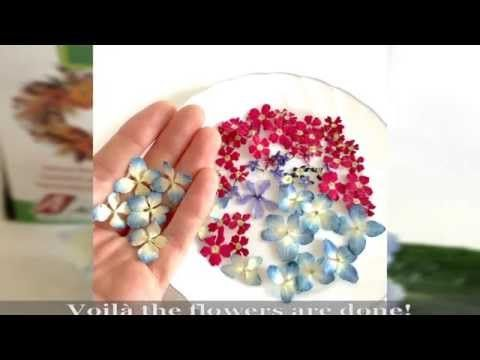 How to dry flowers with Silica Gel! ALAMOULD - YouTube