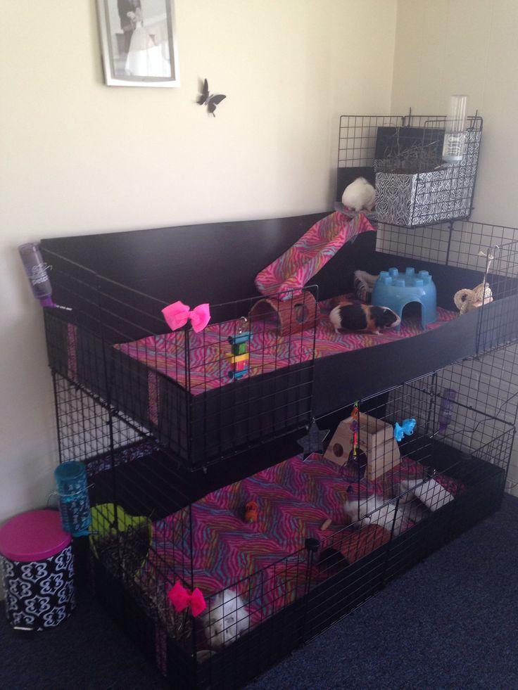 Rainbow zebra print themed C&C cage for guinea pigs.