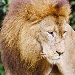 PLEASE SIGN  Protect Lions From Cruel Trophy Hunting