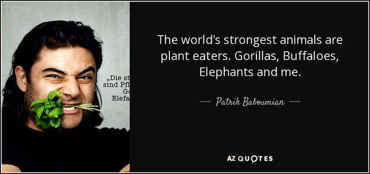 the strongest animals in the world are all plant eaters - Google Search
