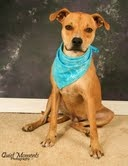 Auggie-Doggie needs a home. He's the best darn family dog you'll ever find!