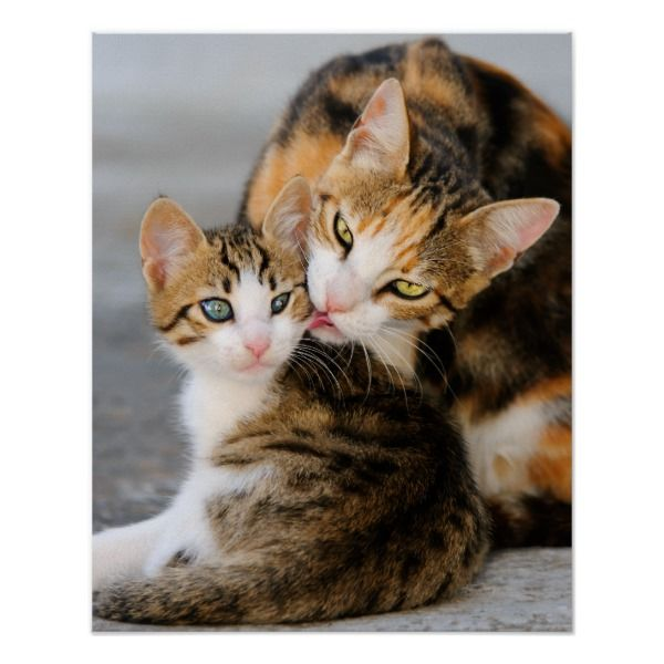 Mother Cat Loves Cute Kitten Poster Zazzle Com Kittens Cutest