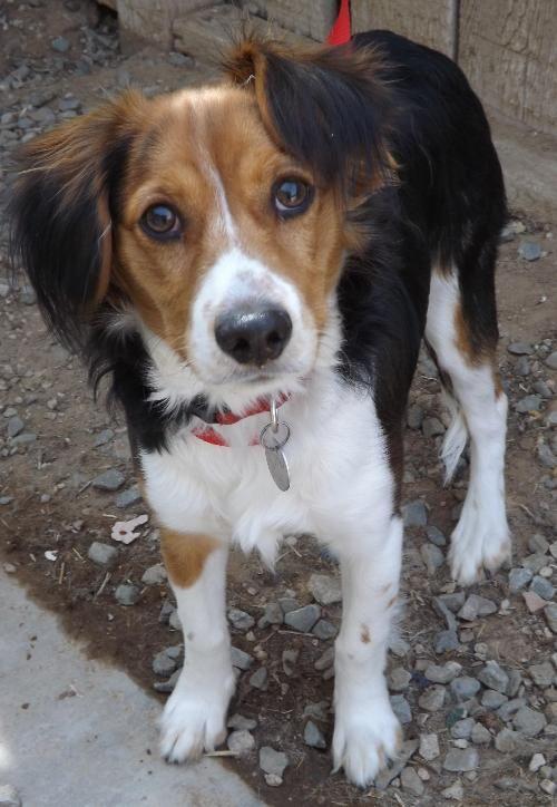 Dog Finder - Adopt a D...