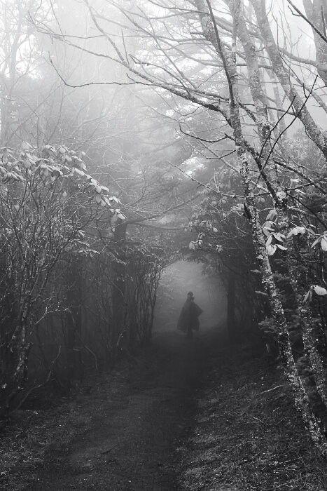 Modern Fairytale/ into the darkness/karen cox. Dark fairy tale pathway.