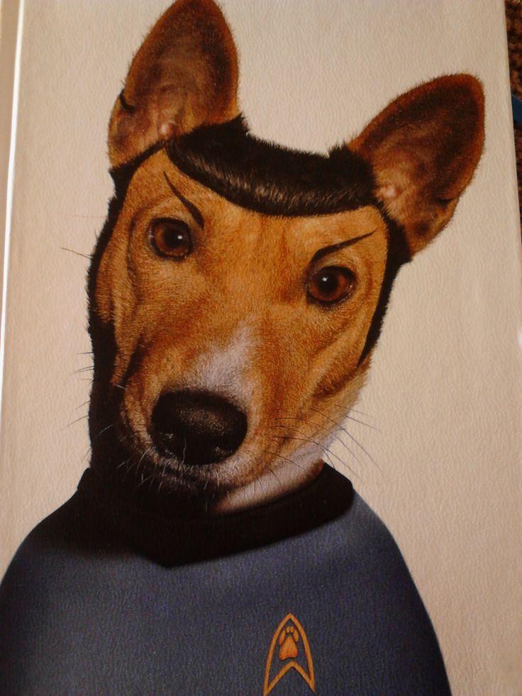 Vulcan dog - Spock dog - use logic over emotion the vulcan way #spockdog #startrek