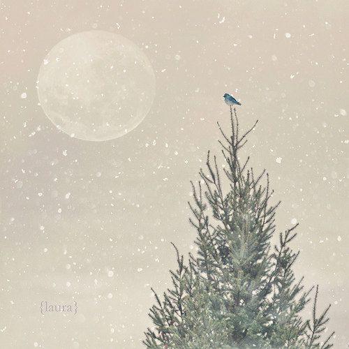 Christmas Photograph Little Blue Bird Winter Holiday