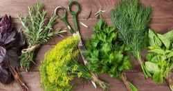Come raccogliere e conservare le erbe aromatiche Le erbe aromatiche, le buone erbe, sono i profumi dell'estate e con la cattiva stagione diventa difficile poterle coltivare perché la maggior parte di esse non sopporta il freddo, hanno un ciclo vege #erbearomatiche #raccolta #conservazione