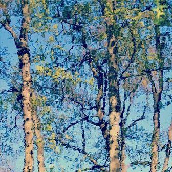 #bomen #fotografie #kunstfotografie