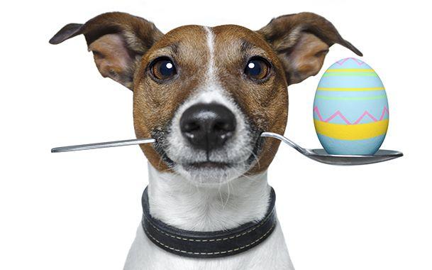 Kasztráció kutyák: Előnyök és hátrányok