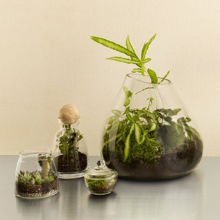 cool diy terrariums