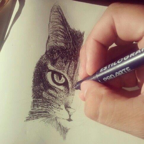 Proceso de gato...