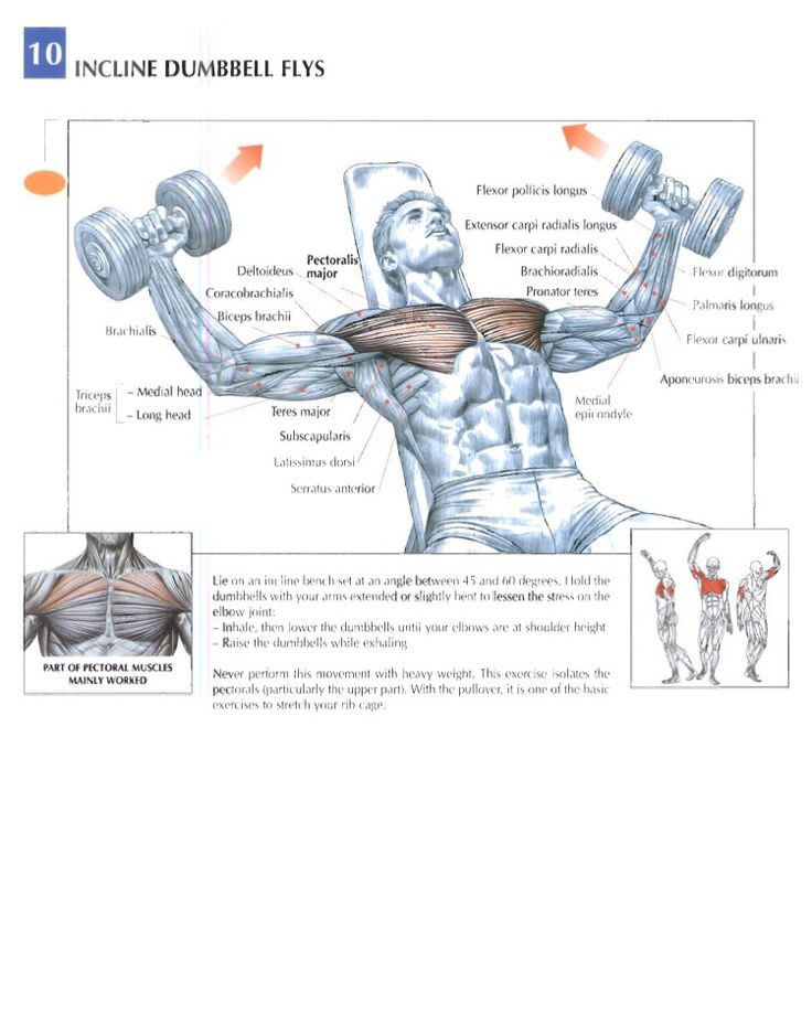 14 best Training Anatomy (Chest) images on Pinterest | Chest ...