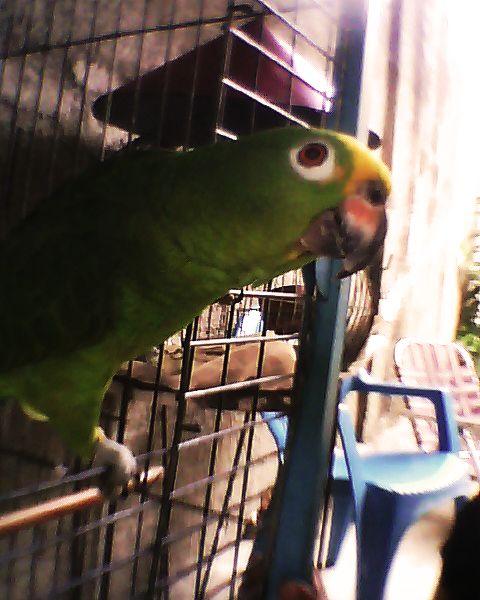 Sebastian en la jaula