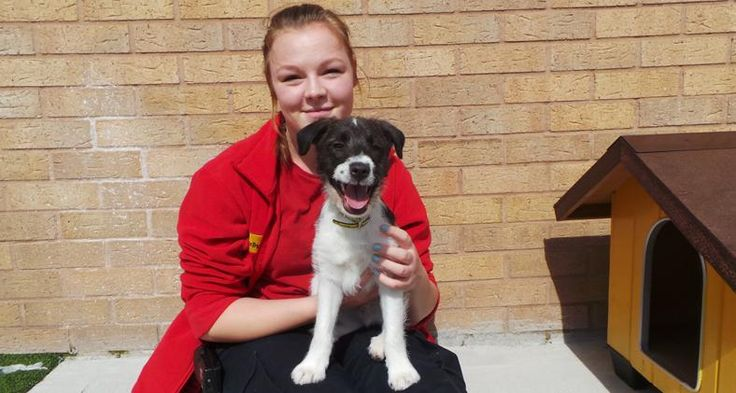 Volunteering at Dogs Trust Manchester! https://www.dogstrust.org.uk/our-centres/manchester/centre-updates/blog/volunteering-at-dogs-trust-manchester