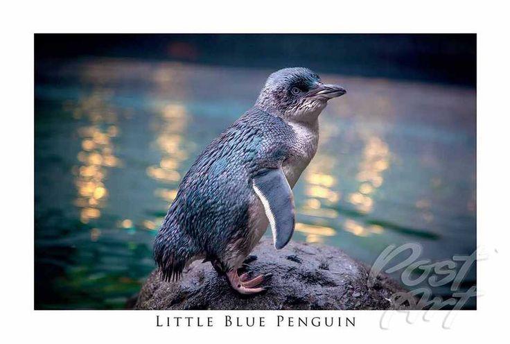 Postart | Wildlife New Zealand Postcard Galleries