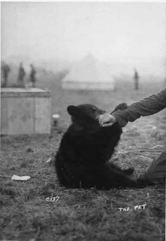Winnie the Pooh. First a military mascot, later world renowned bear of very little brain.