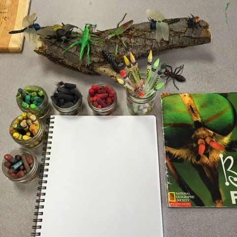 Inquiring Minds: Mrs. Myers' Kindergarten: Inquiring About Insects