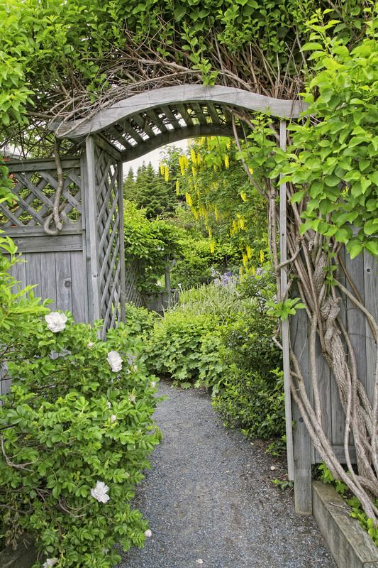 Wooden arbor and fence in a perennial garden or park like setiing. This entrance is constructed with a lattice wall, which makes it perfect for vine growing.