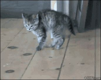 The Kitty Bounce - a great GIF