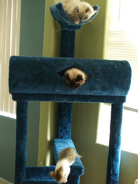 27 best cat tree ideas images on pinterest cat furniture for Homemade cat post