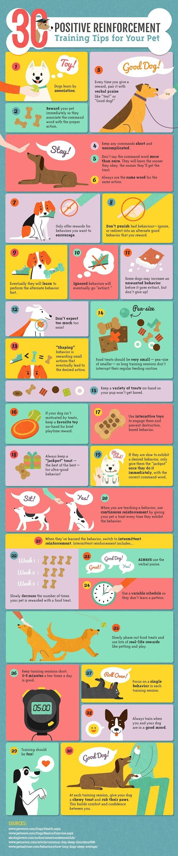 Positive Reinforcement Training for Dogs-Infographic by Amber Kingsley: