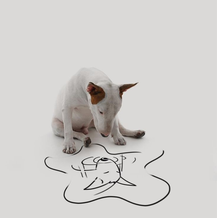 Rafael Mantesso has a lot of fun with his bull terrier, Jimmy, in a series of illustrated photographs. Also, Jimmy is adorable.