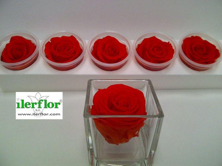 rosas preservadas - Buscar con Google