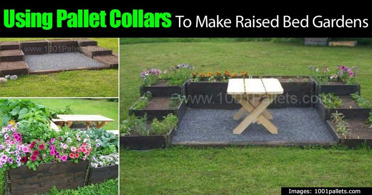 If you are thinking about creating a raised bed garden consider using recycled pallet collars to build it. There are many benefits to using pallet collars to build your garden. One main one being that using pallet collars significantly reduces construction time and hassle because they are...
