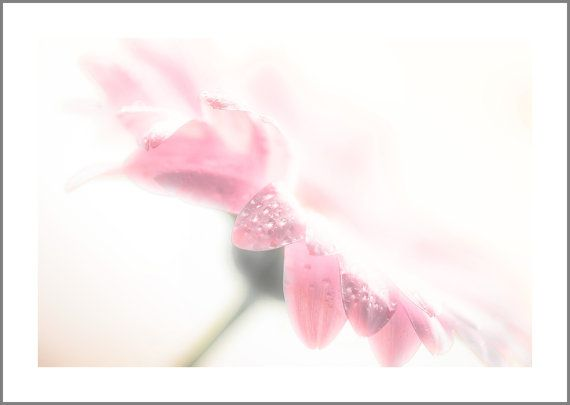 Flower Photography  Oversized Pink Flower by CrionnaPhotography
