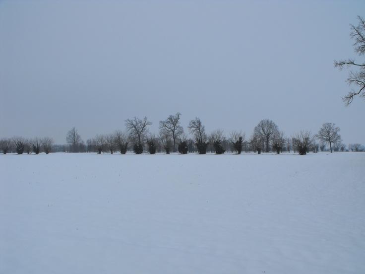 Campi innevati - Malagnino - Provincia di Cremona - Febbraio 2013