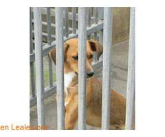Hembra corral 5 ℹ   Albergue Insular de animales de GC en Bañaderos:   Contacto:  609850897 / 928170401   Horario:  L-V: 10:00-12:00 / 16:00-18:30  S-D: 9:00-14:00   #Adopción  Contacto y Info: Pulsar la foto o aquí: https://leales.org/animales-en-adopcion/perros-en-adopcion/hembra-corral-5_i3686    Acerca de esta publicación:   Esta publicación NO ha sido creada por Leales.org y NO somos responsables de su contenido.  Ha sido publicada gratuitamente por un usuario en la multiplataforma…