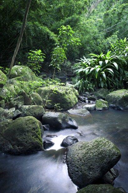 Nuuanu Stream Vertical - Cameron Brooks | Crie seu quadro com essa fotografia https://www.onthewall.com.br/fotografia/paisagem/nuuanu-stream-vertical #quadro #decoração #decoracao #canvas #moldura