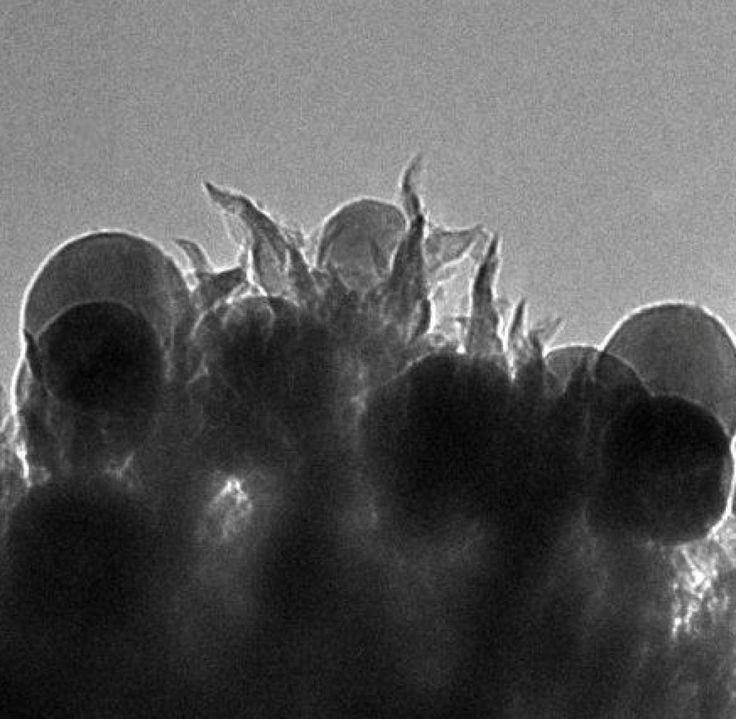 Entscheidend für den Erfolg: Runde Kupfer-Nanopartikel, die auf winzigen Spitzen aus Kohlenstoff sitzen. Hier ein Bild unterm Elektronenmikroskop