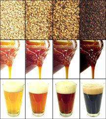 Influência da cor do malte a cor da cerveja.