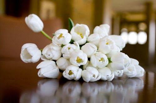 Η τουλίπα είναι αγαπημένο φυτό, με πολλούς θαυμαστές και λάτρεις σε όλο τον κόσμο. Απλή, λιτή και όμορφη, διακοσμεί το χώρο μας και ομορφαίνει τη διάθεσή μας. Η ποικιλία χρωμάτων και σχημάτων ανθέων της τουλίπας είναι εντυπωσιακή: όλες σχεδόν οι αποχρώσεις σε λευκό, κρεμ, κίτρινο,  πορτοκαλί, μωβ, κόκκινο , μπορντό, λιλά, βιολετί, ροζ, δίχρωμες  κ.τ.λ. Το χρώμα της εξωτερικής πλευράς των πετάλων  μπορεί να είναι διαφορετικό με εκείνο της εσωτερικής.