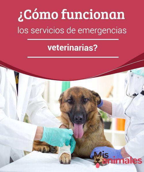 ¿Cómo funcionan los servicios de #emergencias veterinarias?  Diferentes centros y #clínicas para #perros y gatos cuentan con especialistas que están #disponibles para urgencias 24 horas al día. ¿Sabes cómo actúan los servicios de emergencias veterinarias?