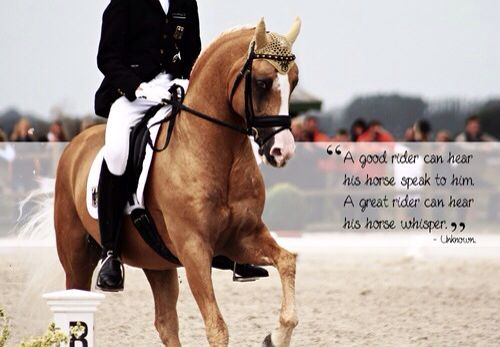 A good rider can hear what his Horse speak, the great rider can hear what his Horse whispers