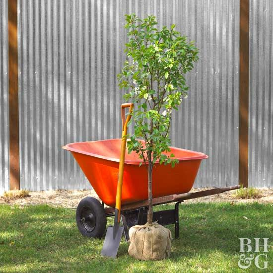 See how to purchase, plant and care for your balled and burlapped trees and shrubs in 8 steps.