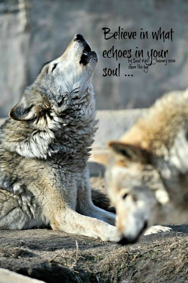 Pin by Angel Seeker on WOLVES   Wolf, Wolf howling, Wolf stuff