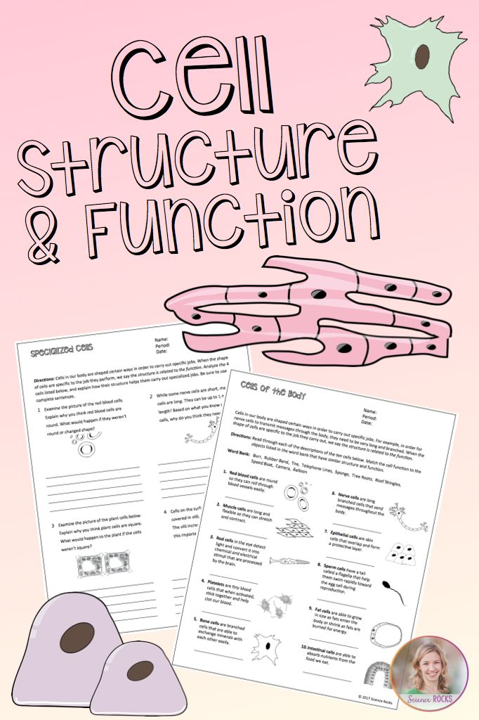 Cell structure and function worksheets from Science Rocks #cells #biology
