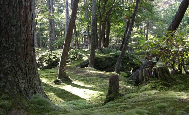 """Forest glen in the Moss Garden near Kyoto, Japan."" (Courtesy peghaz/myBudgetTravel)"