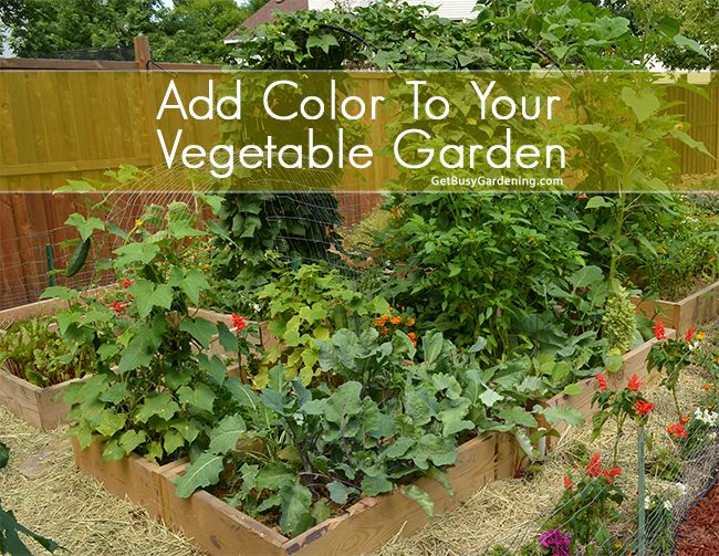519 best growing your own vegetables images on pinterest for Grow your own vegetable garden