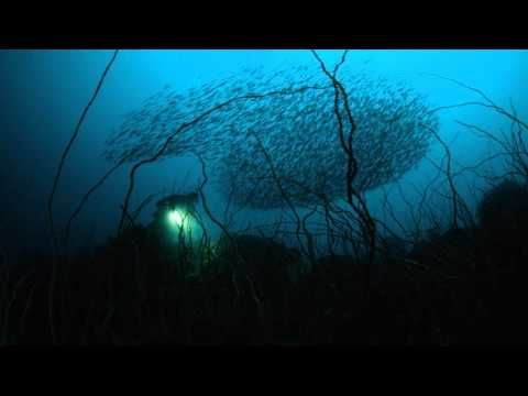 Terry Da Libra - Enchanted Waters (Original Mix) - YouTube