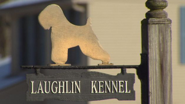 OXFORD (CBS) – Town officials in Oxford have issued a cease and desist order to a home kennel that an I-Team investigation revealed was selling puppies living in deplorable conditions. I-Team: Former Kennel Employee Speaks Out About Deplorable Conditions In January, the I-Team looked into Laughlin Kennel in Oxford and found that dogs were kept in small cages, were often covered in feces and in some cases died. Not long after, a Boston couple to